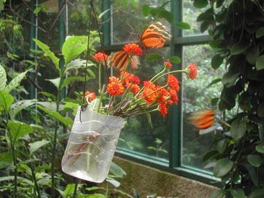 Butterflycostarica