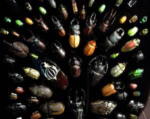 Beetles_1